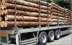 原木市場で厳選した丸太を使用